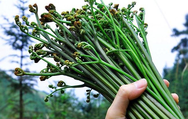 [s]蕨菜