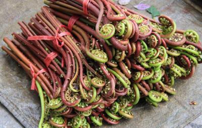 山蕨菜烘干工艺