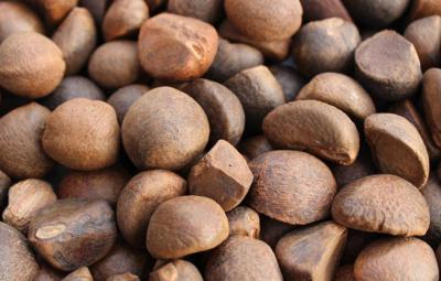 油茶籽烘干工艺